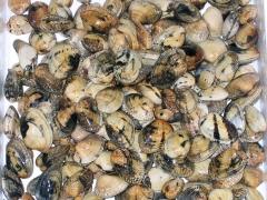 Frutos do mar a bom preço!
