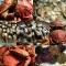 A maior variedade em frutos do mar!