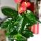 Garden brasil importa��o e exporta��o - foto 4
