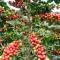 Acompanhamento das plantações desde a plantação do fruto até a produção final!