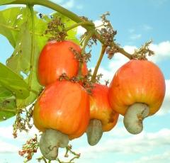 A melhor e maior variedade em polpas de frutas!