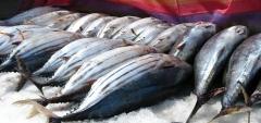 Peixes que fazem a diferença!