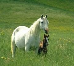 Clube do cavalo de unaí - animais e serviços que fazem a diferença!