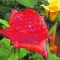 Art' n floricultura - null - foto 7