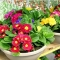 Art' n floricultura - null - foto 30