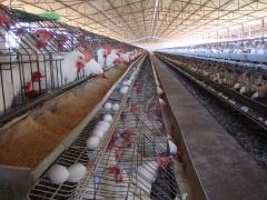 Avepar aves do parque - produtos que fazem a diferença
