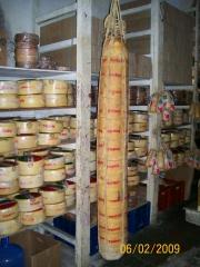 Provolone tania de 100 kg