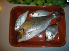 Cheiro verde-peixe fresco