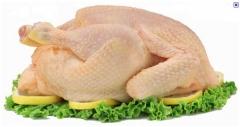 Cheiro verde-frango fresco