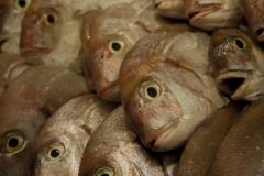 Peixes de qualidade a bom preço!
